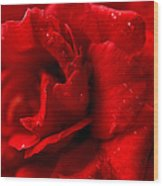 Passion For Flowers. Sensual Petals Wood Print
