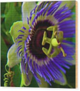 Passion-fruit Flower Wood Print