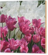 Passionate Tulips Wood Print