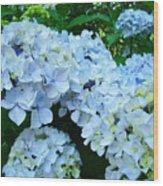 Pastel Blue Hydrangea Flowers Green Garden Floral Wood Print