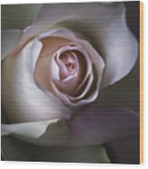 Pastel Flower Rose Closeup Image Wood Print by Artecco Fine Art Photography