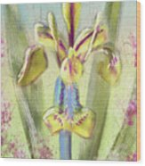 Pastel Iris Wood Print