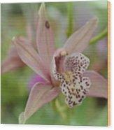 Pastel Orchid Wood Print