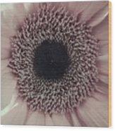Pastel Pink Daisy Wood Print