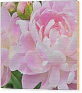 Pastel Pink Peonies Wood Print