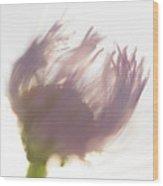 Pastel Purple Flower Wood Print