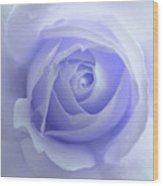 Pastel Purple Rose Flower Wood Print by Jennie Marie Schell