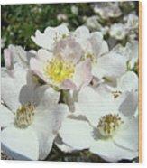 Pastel White Yellow Pink Roses Garden Art Prints Baslee Wood Print