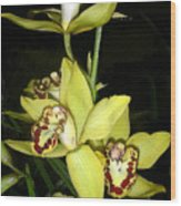 Pastel Yellow And Wine Orchids Wood Print