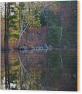 Pastels In Reflection  Wood Print