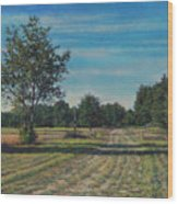 Pastoral Off Poplar Hill Road Wood Print