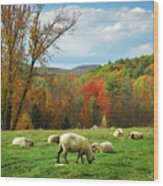 Pasture - New England Fall Landscape Sheep Wood Print