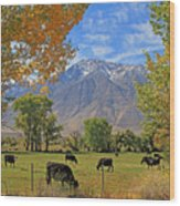 Pasture With A View Wood Print