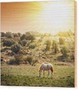 Pasturing Horse Wood Print