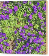 Patch Of Pansies Wood Print