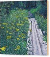 Path 4 Wood Print