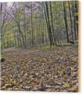 Path Home - Kettle Moraine 10-14-16 Wood Print