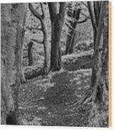 Path In Crownest Woods Wood Print