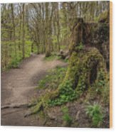Path In Judy Woods Wood Print