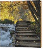 Path In Plitvice Wood Print