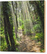 Path In Sunlit Forest Wood Print by Elena Elisseeva