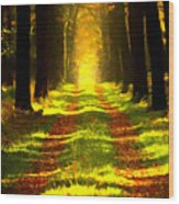 Path In The Forest 715 - Painting Wood Print
