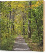Path In The Woods During Fall Leaf Season Wood Print
