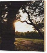 Path Into The Sun Wood Print