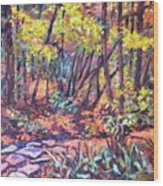 Path Near Pandapas Wood Print