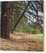 Path Of Enlightenment Wood Print