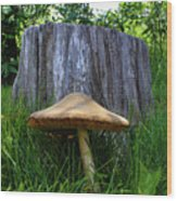 Path of Mushrooms Wood Print
