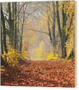 Path Of Red Leaves Towards Light Wood Print