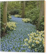 Path Of The Beautiful Spring Flowers Wood Print