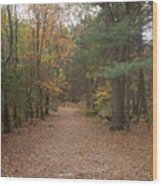 Path On Wilsons Mountain Wood Print