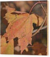 Path Through A Leaf Wood Print