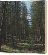 Path Through Cannock Chase Wood Print