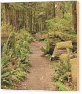 Path Through Mossy Forest Wood Print