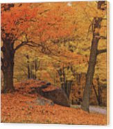 Path Through New England Fall Foliage Wood Print
