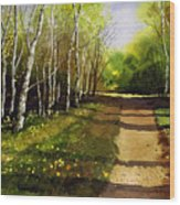Path Through Silver Birches Wood Print