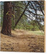 Path To Enlightenment 1 Wood Print