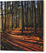 Path To Serenity - Nickerson State Park Wood Print