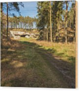 Path To St Cuthbert's Cave Wood Print