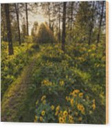 Path To The Golden Light Wood Print