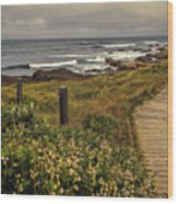 Path To The Sea Wood Print