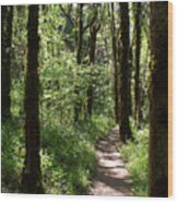 Pathway Through The Woods Wood Print