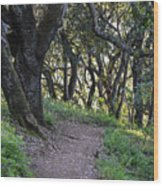 Pathways Wood Print
