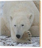 Polar Bear Patience Wood Print