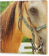 Patient Horse Wood Print