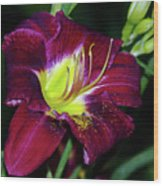 Patricia Neal Daylily Wood Print