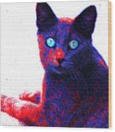Patriotic Cat Wood Print